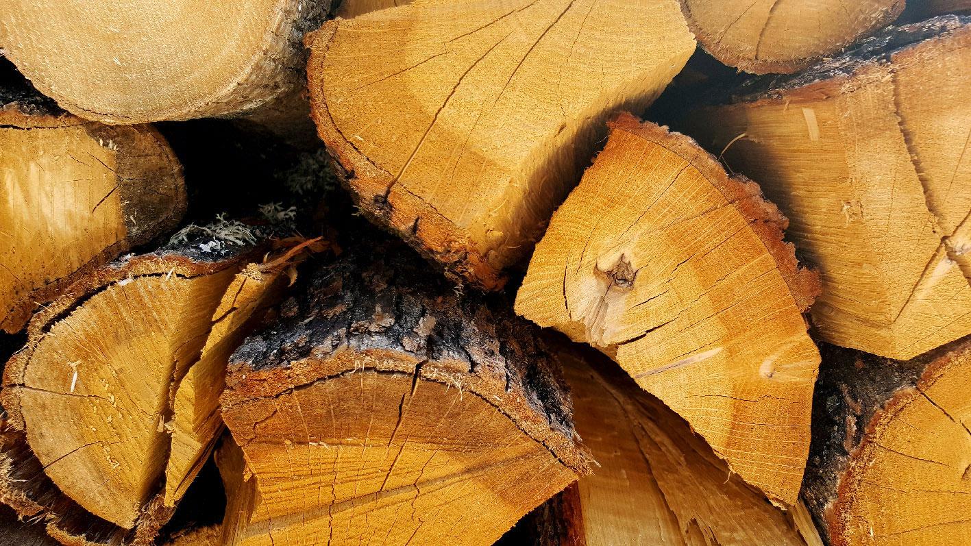 rovere legna da ardere